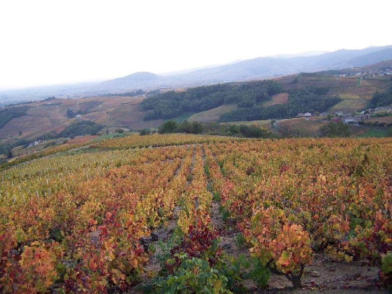 Fichier:Vignobles du Beaujolais vers Avenas.jpg
